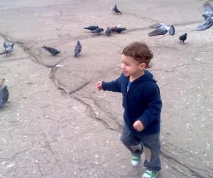 cu porumbeii