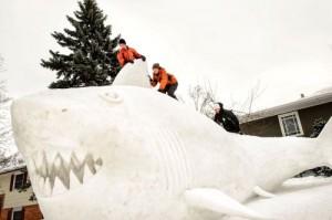 Snow Shark - Minneapolis