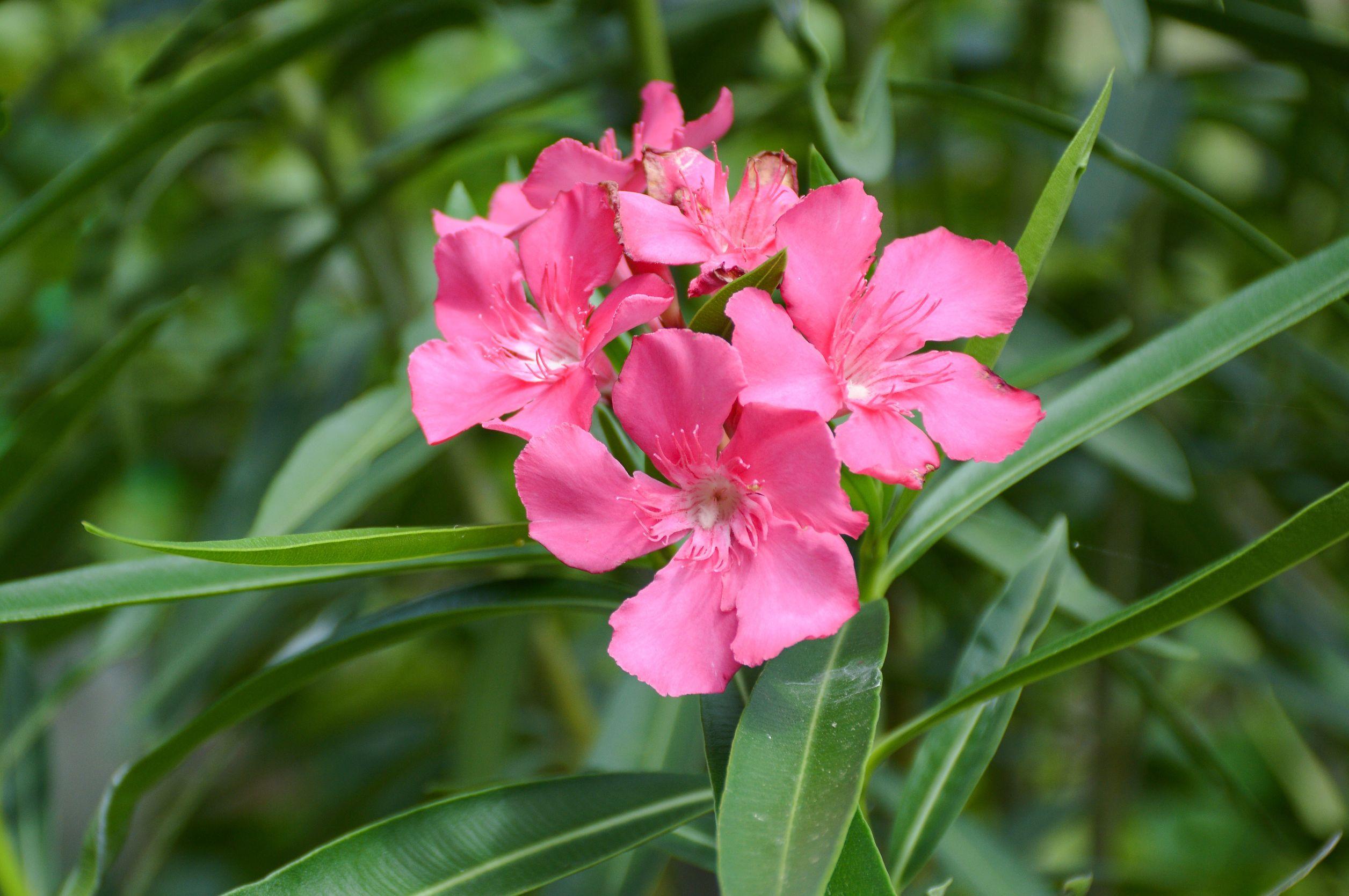 leandru roz