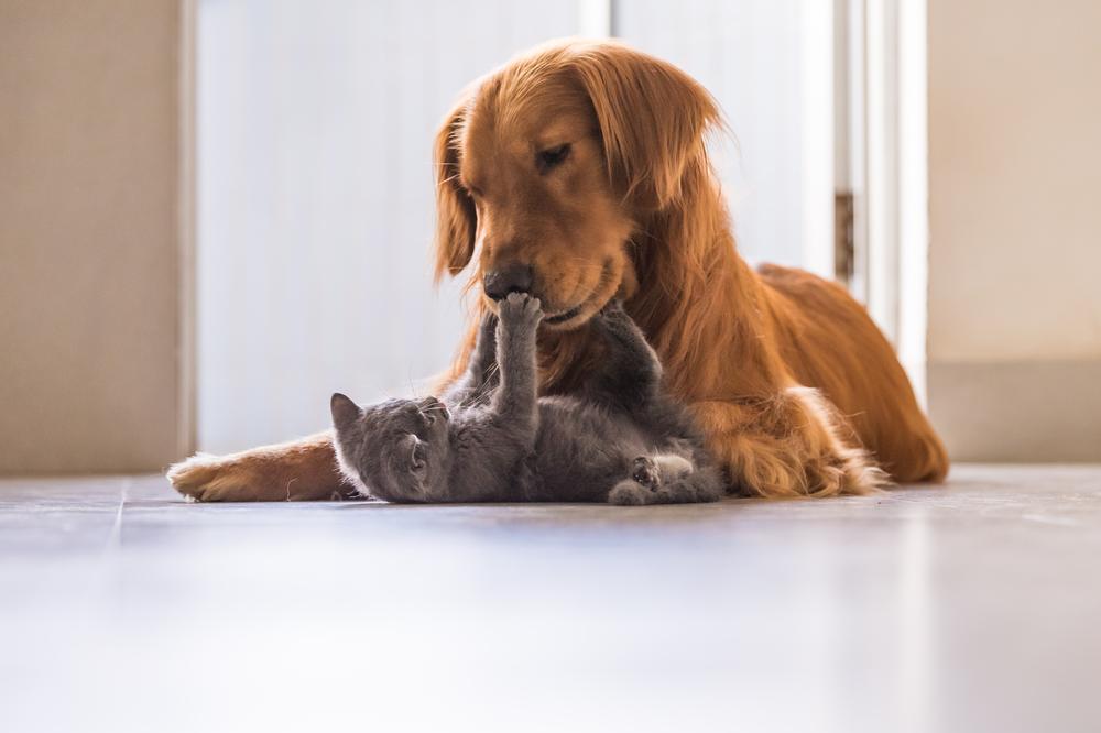 Curiozități despre animale - câini și pisici