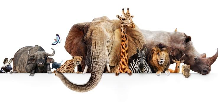 Curiozități despre animale sălbatice