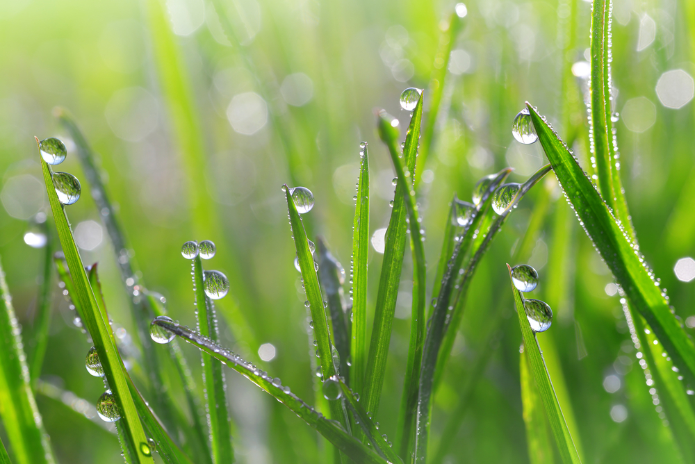 Fenomene ale naturii - Roua