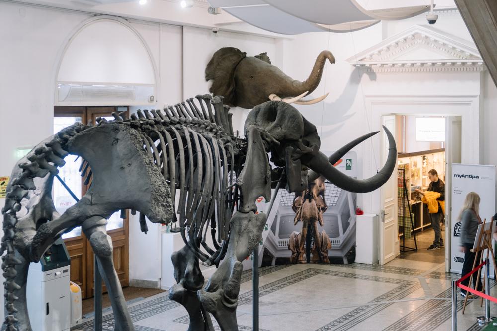 Locuri de vizitat în București cu copiii - Muzeul Grigore Antipa