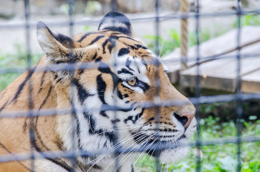 Locuri de vizitat în București cu copiii-Zoo Băneasa