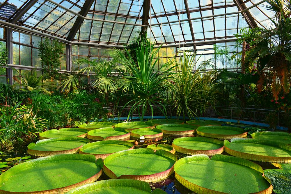 Locuri de vizitat în Cluj - Grădina Botanică
